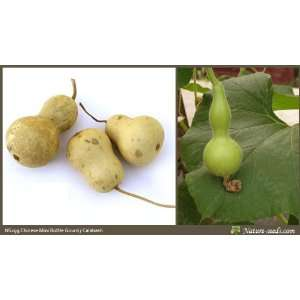 Nature Seeds Chinese Mini Bottle Gourd / Calabash 10