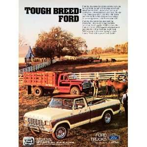 1978 Ad Ford Pickup Trucks Pasture Cow Cattle Automobile
