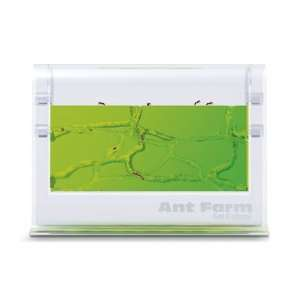 Illuminated Gel Ant Farm Toys & Games